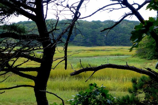 Wellfleet Bay Wildlife Sanctuary : The salt marsh