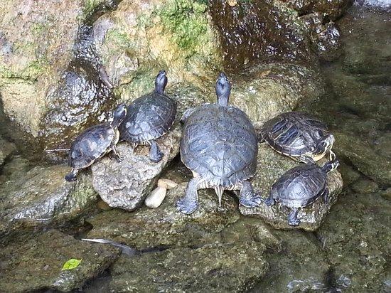 Atahotel Naxos Beach : Turtles