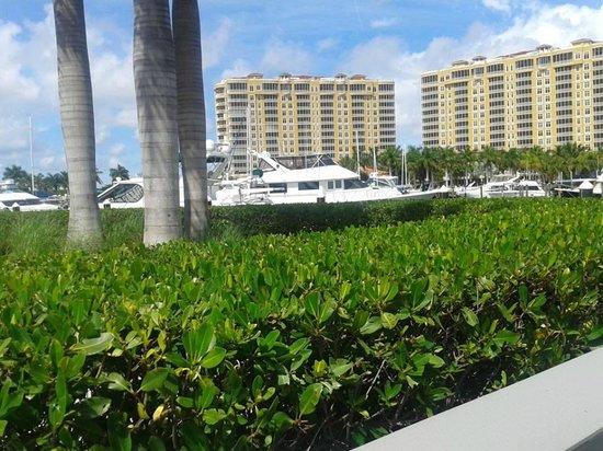 The Westin Cape Coral Resort At Marina Village : Condos and Marina