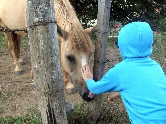 Panoramadorf Saualpe: cavalli