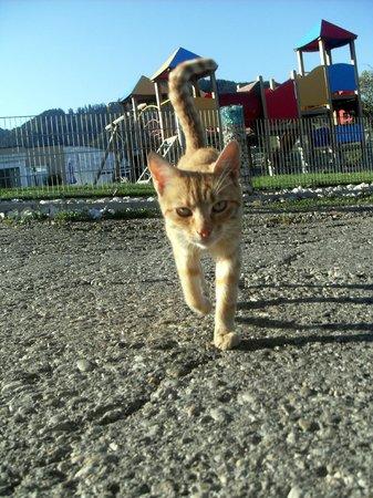 Panoramadorf Saualpe: gatto&parco giochi