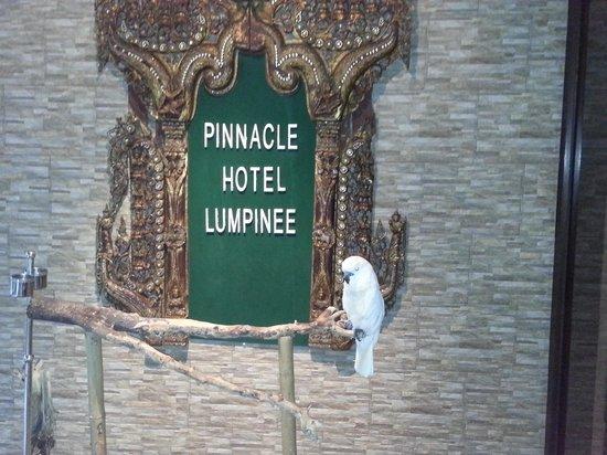 Pinnacle Lumpinee Park Hotel : Mark the parrot