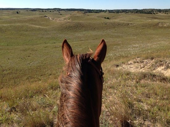 Rowse's 1+1 Ranch: as far as the eye can see