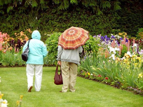 Schreiner's Iris Gardens: Rain or shine, the Display Gardens are open at bloom time