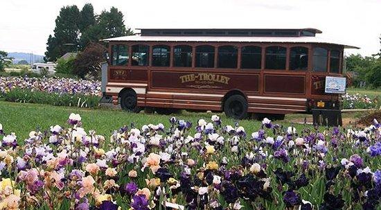 Schreiner's Iris Gardens: Trolley brings visitors to the Display Gardens during Keizerfest Weekend