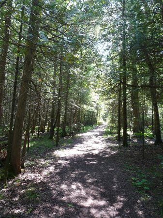 Wagon Trail Campground: Trail to the Lake
