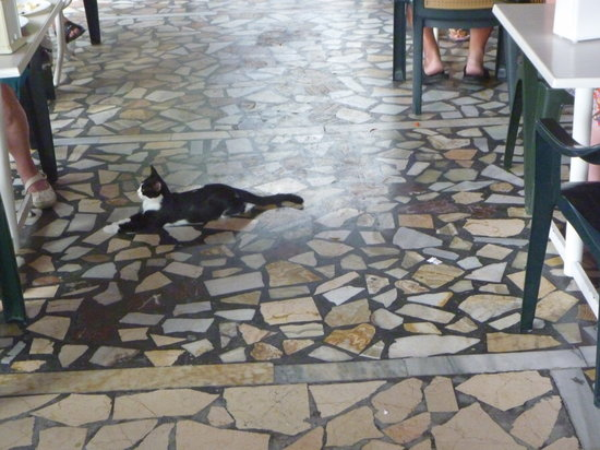 Kami Hotel : cats all over the restaurant