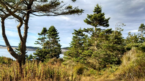 Fort Casey State Park : The trees, the ocean, the beaches, a happy place