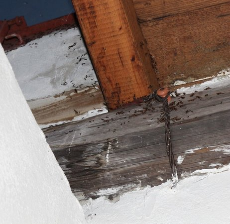 Fattoria di Castiglionchio: Flying ants invading apartment if lights are on after dark
