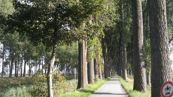 Quasimundo Bike Tours : Tree-lined roads along the canals make for a pleasant ride.