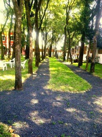 Elegance Palace Hotel: árboles muy antiguos que invitan a caminar entre ellos...