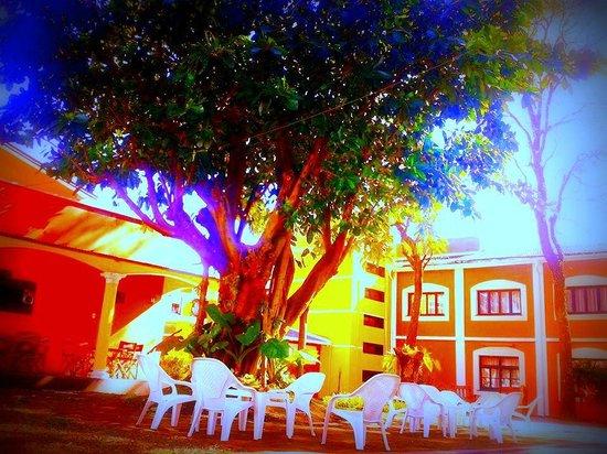 Elegance Palace Hotel: arboles frondosos ...