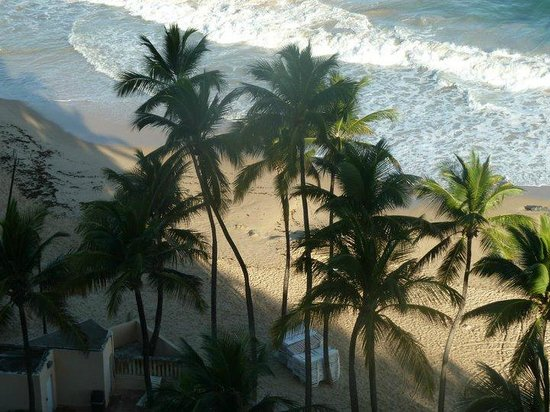 San Juan Marriott Resort & Stellaris Casino: Palm Trees