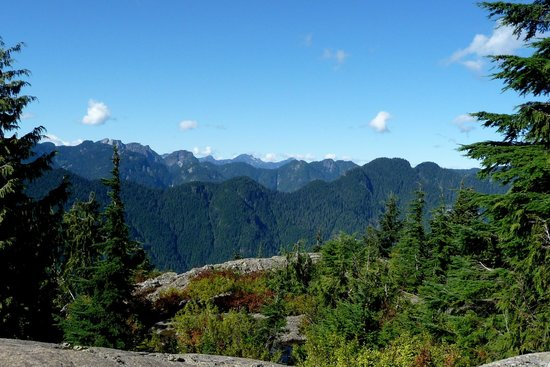 Mt Seymour: Lots of trees and mountain views from the Dog Mountain viewpoint.