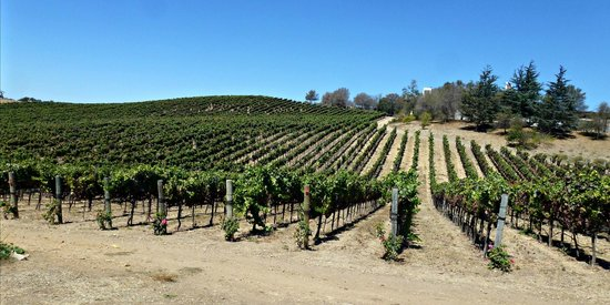 Laetitia Vineyard and Winery: Vineyards