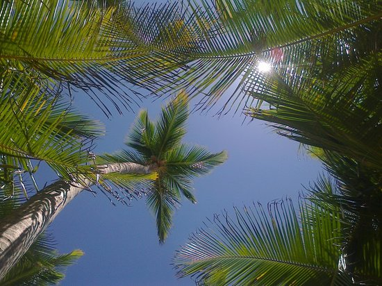 Sirenis Punta Cana Resort Casino & Aquagames: Na praia