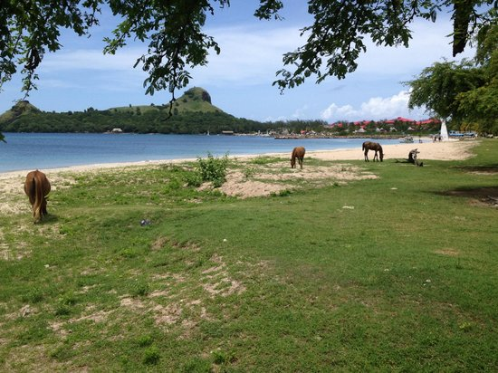 Somewhere Special Guesthouse : Gros Islet Beach