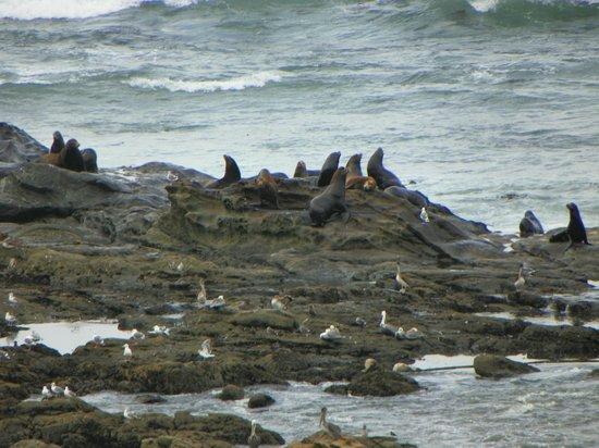 Cape Arago State Park: wildlife on the rocks