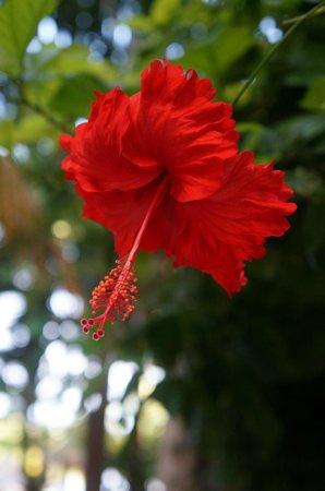 Villas HM Paraiso del Mar : You will enjoy the landscaping