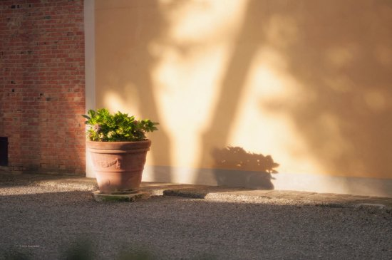 Villa Poggiano: Morning light on a wall