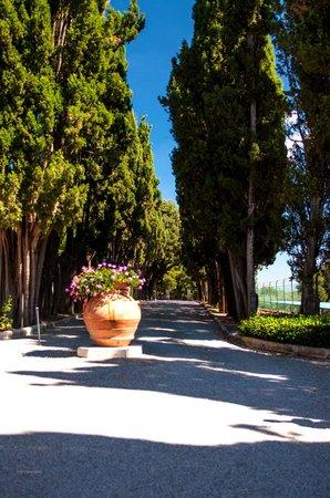 Villa Poggiano: Cypress trees lining the entryway