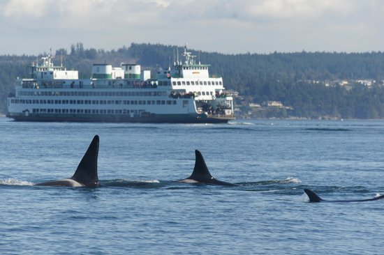 Deer Harbor Charters: Orcas and the Ferry