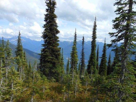 Mount Revelstoke National Park: Summit of Mount Revelstoke