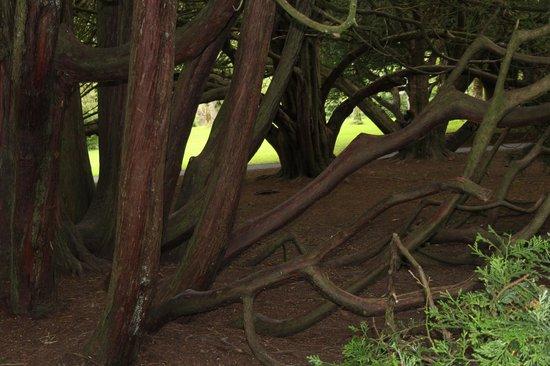 Royal Abbey of Cong: Natur pur neben Historie
