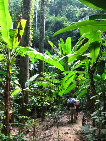 Perhentian Tuna Bay Island Resort: jungle trekking