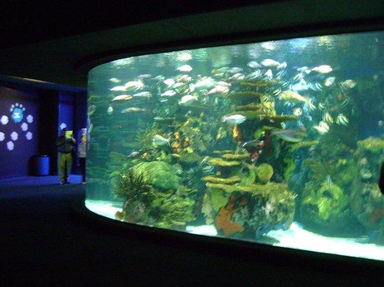Marriott's OceanWatch Villas at Grande Dunes: Ripley's aquarium