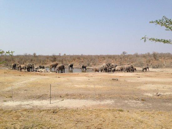 Jamala Madikwe : Elephant at waterhole from lodge deck