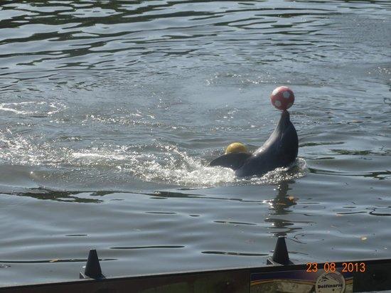 Варадеро, Куба: Gracias de los delfines en Varadero