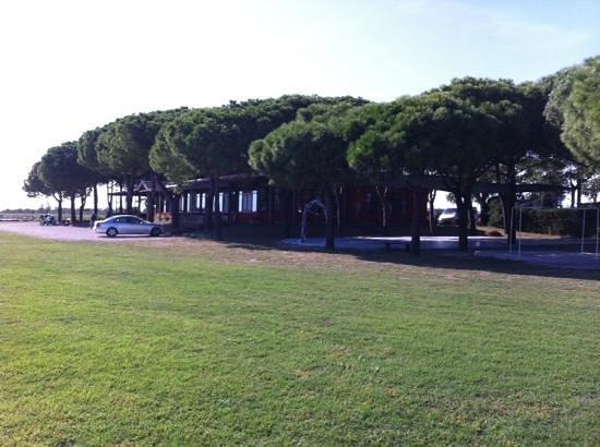 Ristorante Marina 70: tra gli alberi