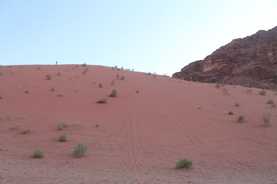 Wild Wadi Rum: Duna di sabbai rossa