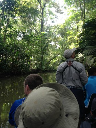 Pachira Lodge: Early morning wildlife tour in the jungle