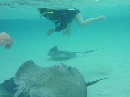Stingray Watersports: エイと一緒に泳ぐなんて