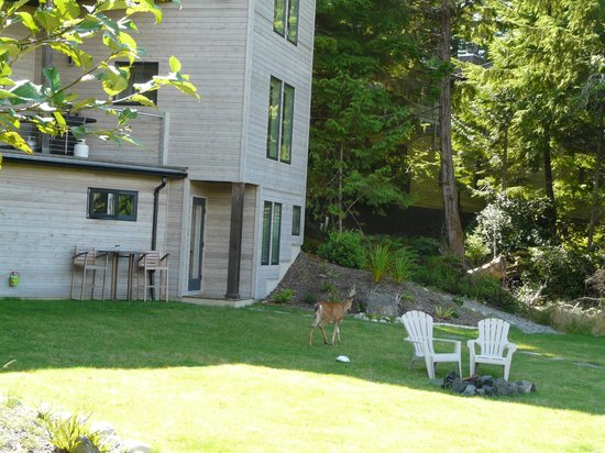 Hyphocus Inn: Deer near our room