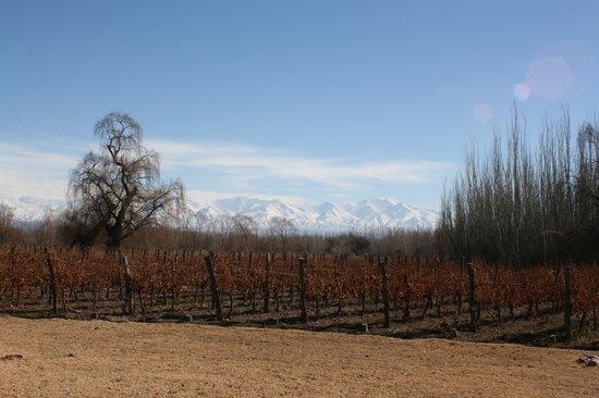 Postales Boutique Wine Hotels - Valle de Uco: Vista de mi Habitacion