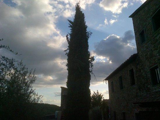 Borgo Casa al Vento: Casa al Vento - cipresso