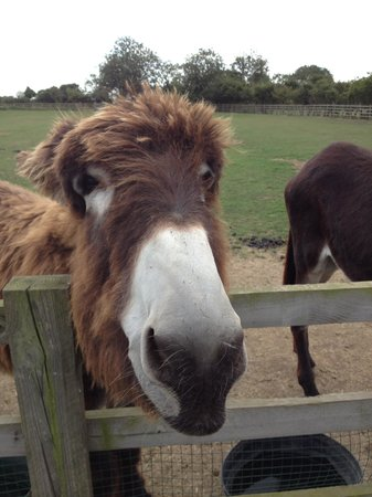 Radcliffe Donkey Sanctuary: Why the long face?!?!