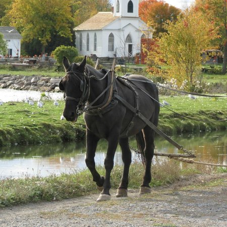 Upper Canada Village : Horse Drawn Water Wagon