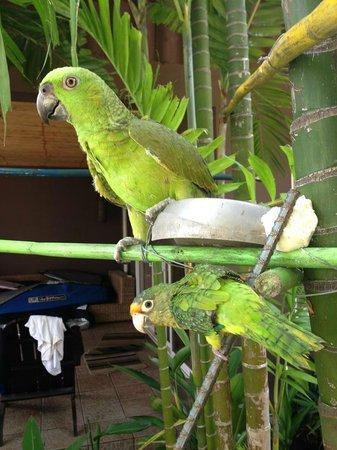 Monkey Lala El Tunco Suites: hospedes