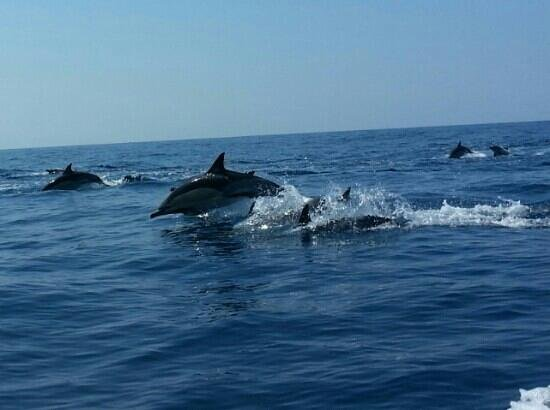 Dolphins Driven: fantastic!