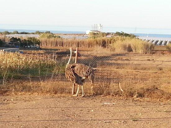 Famagusta Viewpoint & Mini Zoo