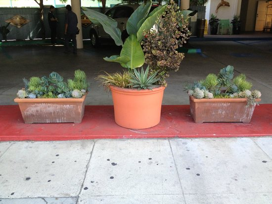 Best Western Beachside Inn: One of the many 'pocket gardens' that adorn the property