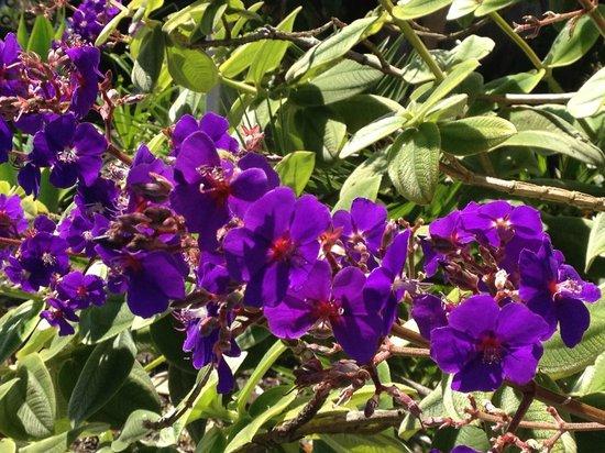 BEST WESTERN Beachside Inn: Beautiful flowering plant in the parking lot