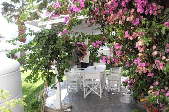 Angie's Studios : fiori