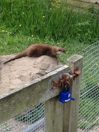 Blue Planet Aquarium: Outside bit with playground area & otters