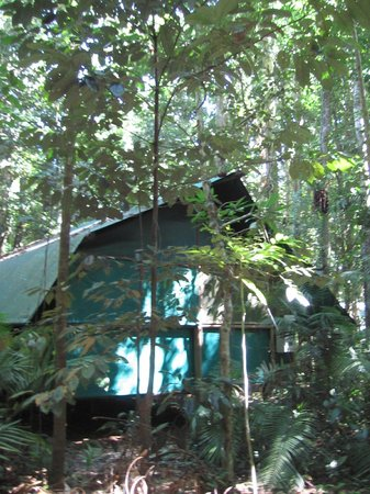 Daintree Crocodylus: Our cabin under the trees