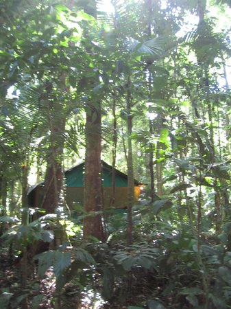 Daintree Crocodylus: Surrounded by the jungle